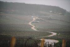 On field tutoring | Domaine Leroy | Romanée Saint Vivant | Bourgogne