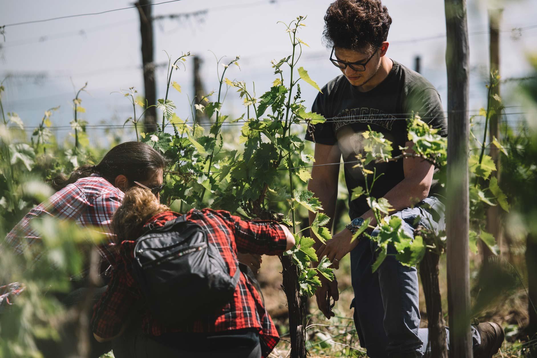 Spring training   Planeta   Passopisciaro   Etna   Sicilia   Italy