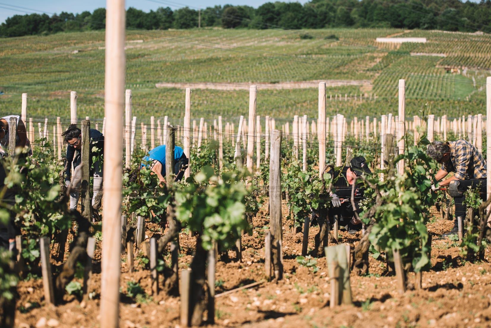 Spring training   Domaine Leroy   Romanée Saint Vivant   Bourgogne