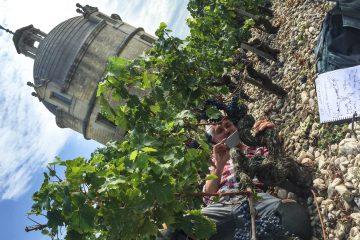 Simonit&Sirch go to Château Latour and Moët&Chandon