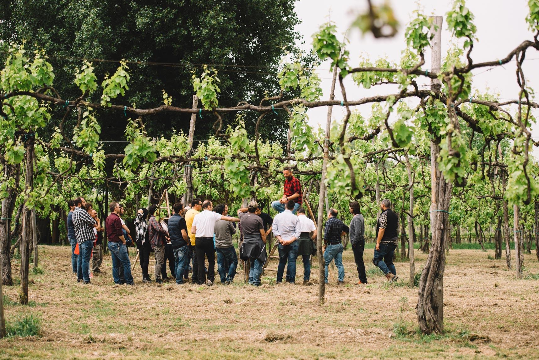 Spring training   Feudi di San Gregorio   Taurasi   Campania
