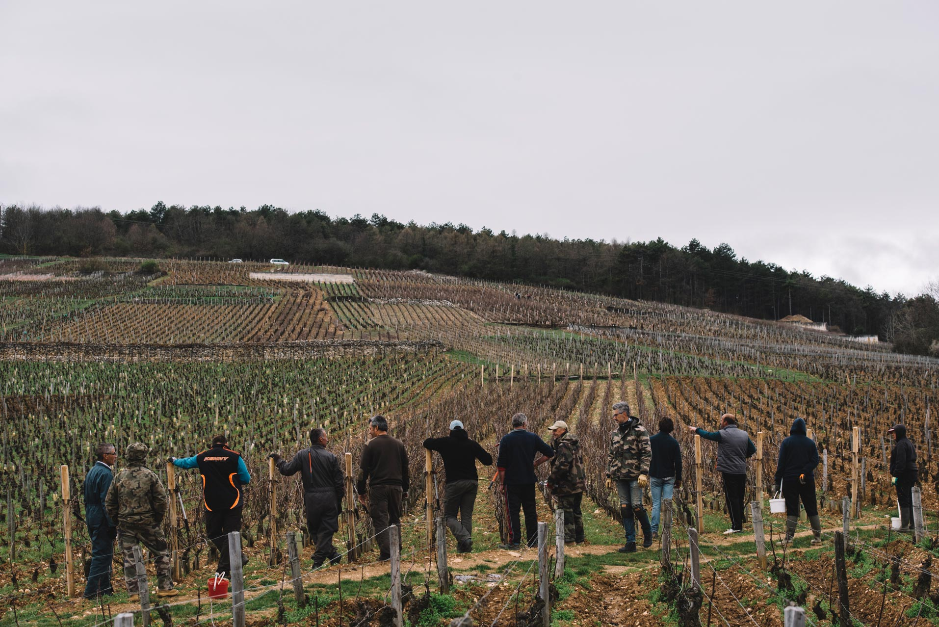 On field tutoring | Domaine Leroy | Richebourg | Bourgogne
