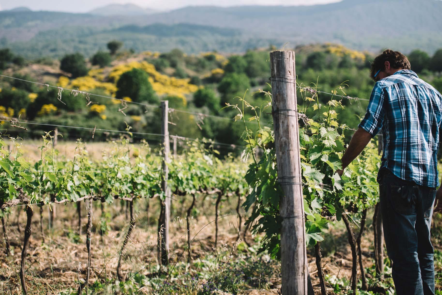 Spring training | Planeta | Passopisciaro | Etna | Sicilia | Italy
