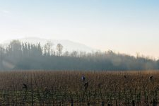 On field tutoring | Ca del Bosco | Franciacorta | Italy