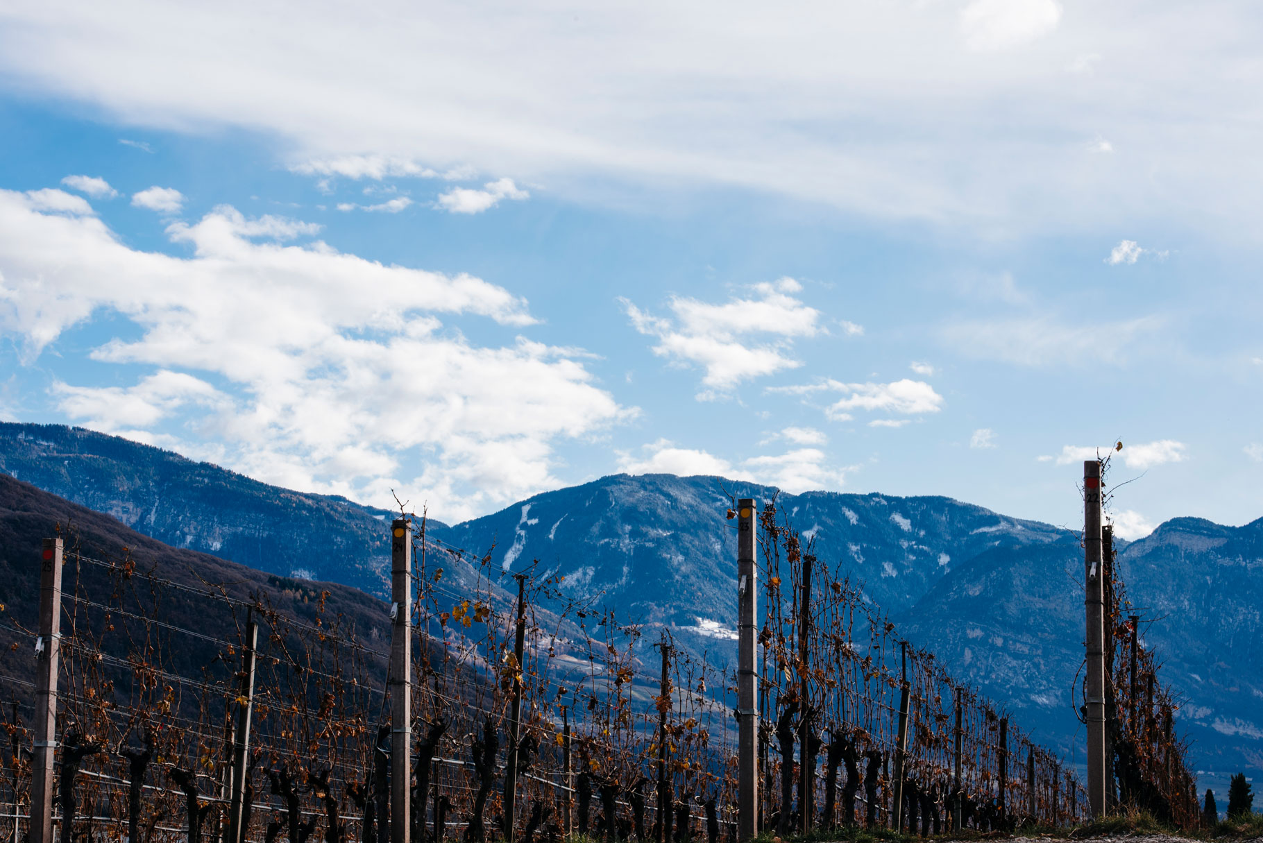 Manincor vineyards   Caldaro   Alto Adige   Italy