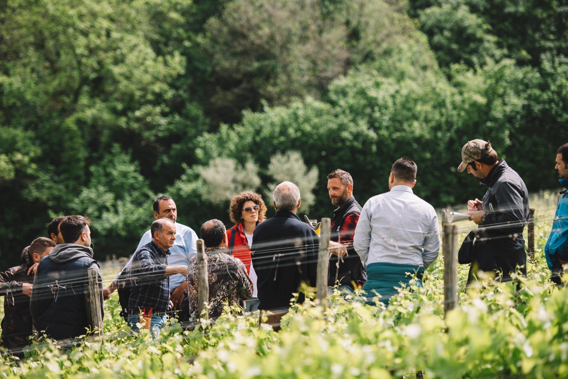 Spring training | Feudi di San Gregorio | Taurasi | Campania