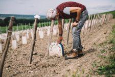 Vineyard screening   Louis Roederer   Champagne