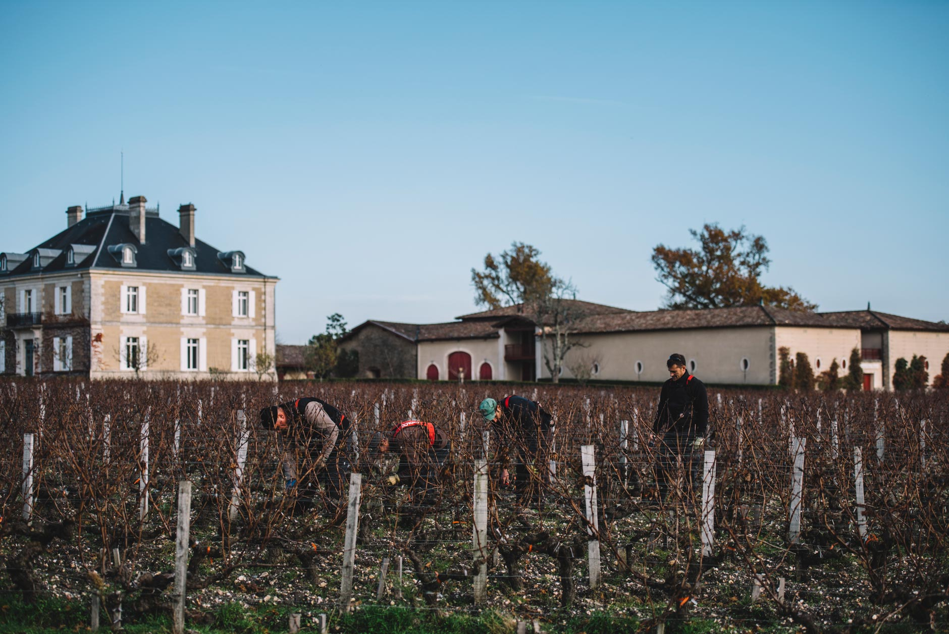 On field tutoring | Château Haut-Bailly | Pessac | Bordeaux