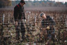 On field tutoring   Château Haut-Bailly   Pessac   Bordeaux