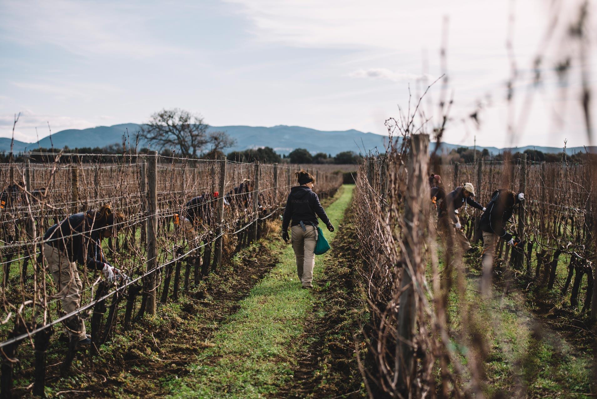 On field tutoring | Ornellaia | Bolgheri | Toscana