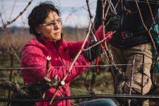 On field tutoring   Ornellaia   Bolgheri   Toscana