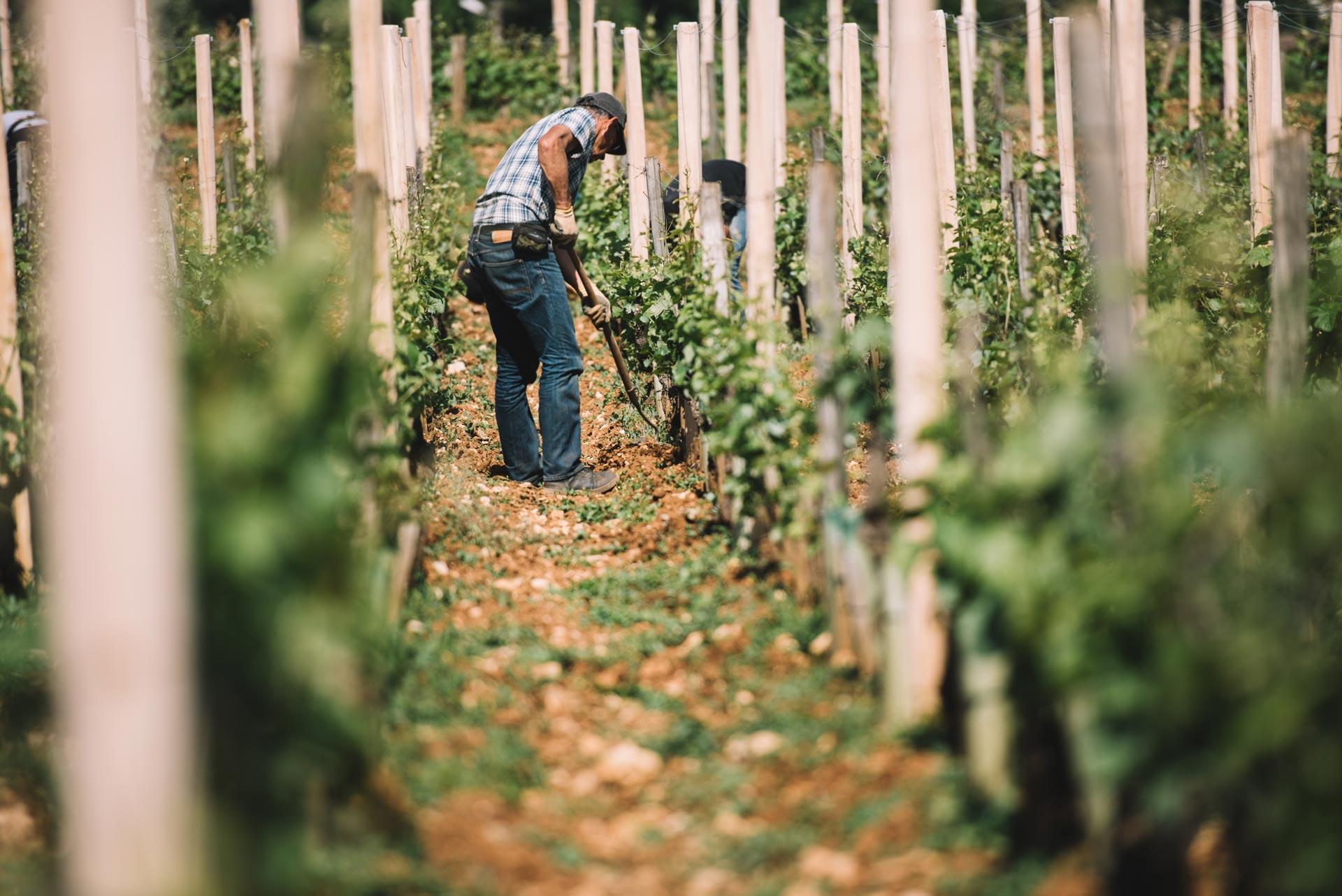 Soil working | Domaine Leroy | Richebourg | Bourgogne