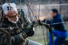 Winter training   Bellavista   Franciacorta
