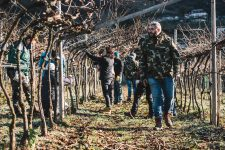 Training for winter pruning of the pergola | Ferrari | Trento