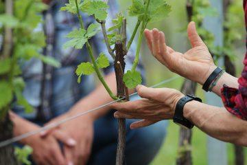 Winery Experience for NextInWine 2015