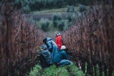 Winter practice | Bellavista | Franciacorta | Lombardia
