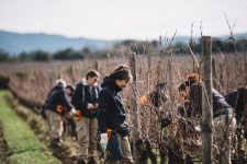 On field tutoring | Ornellaia | Bolgheri | Toscana