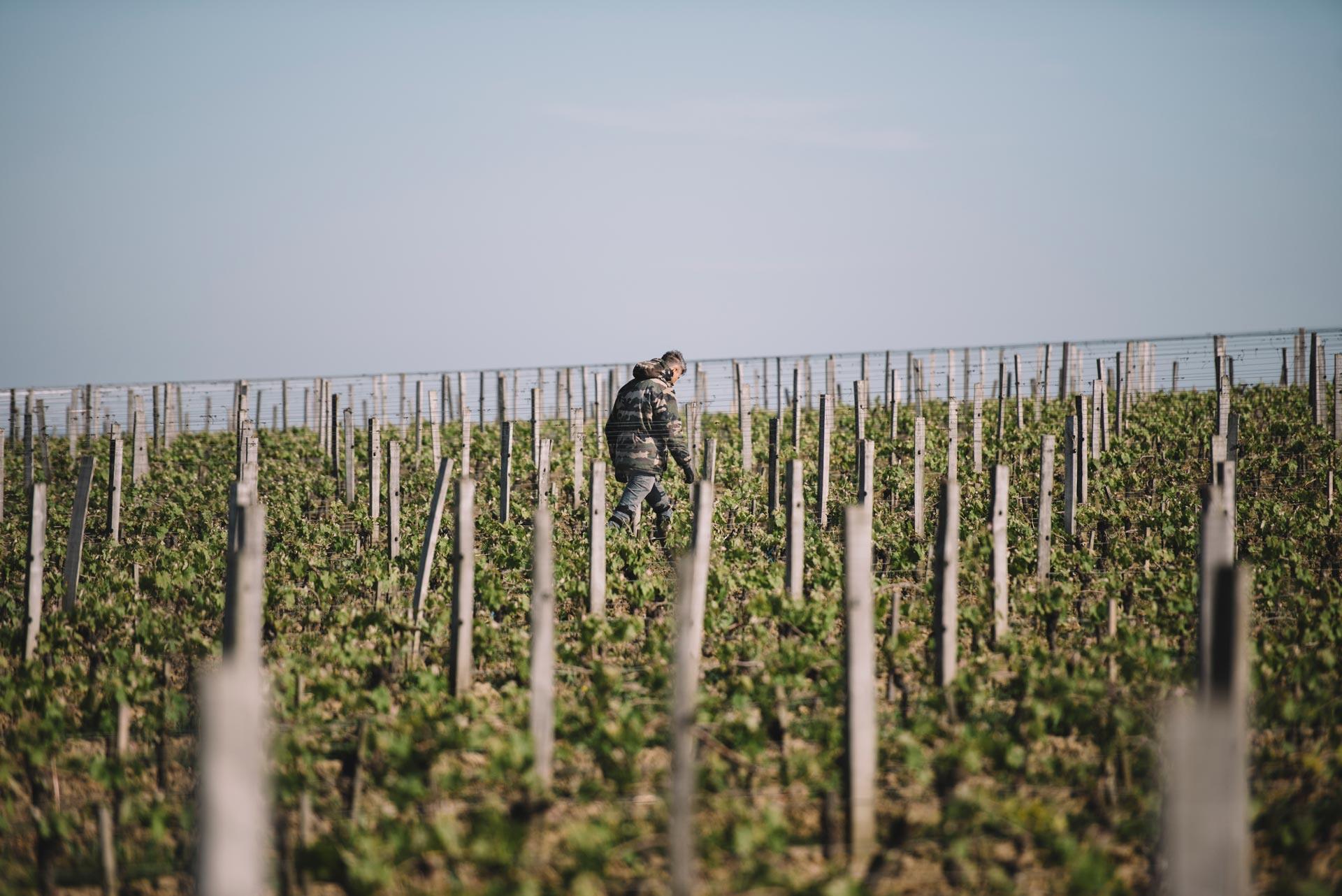 Spring training | Château Côte de Baleau | Saint Émilion | Bordeaux