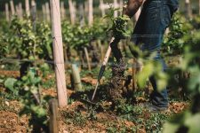 Soil working | Domaine Leroy | Richebourg | Bourgogne