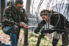 Training for winter pruning of the Guyot | Ferrari | Trento